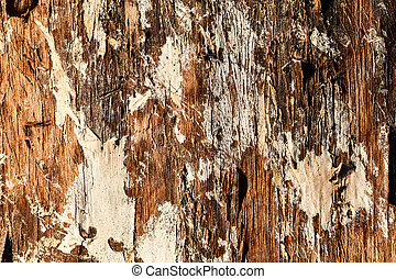 texture of bark of an old tree, photo as a background