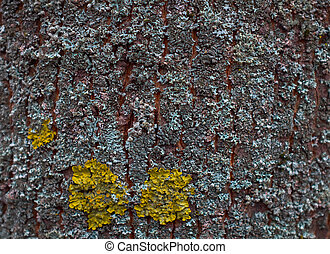 texture of bark tree with yellow and blue moss