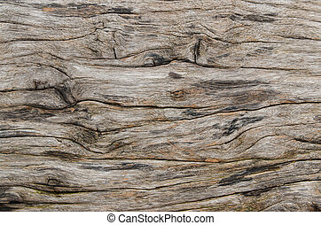 texture of bark wood ,natural background