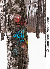 Texture of birch bark, painted in different colors