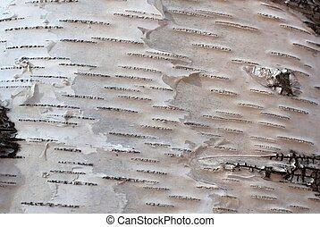 Texture of birch bark