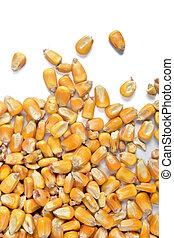 texture of corn
