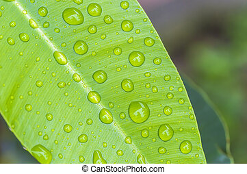 texture of droplets on green leaf