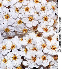 Texture of flower