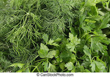 Texture of fresh herb close up.