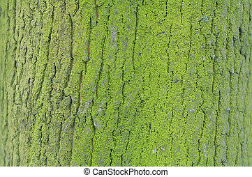 Texture of green mossy tree bark