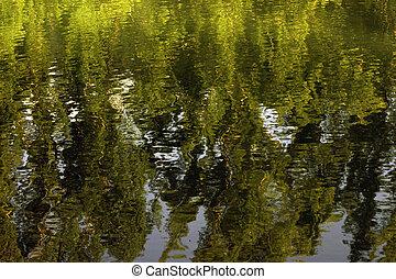 Texture of green vegetation