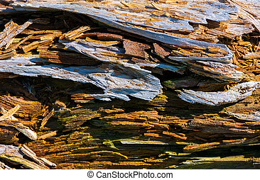 texture of moldering wood log. Old grungy and weathered...