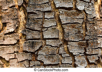 Texture of old tree rind