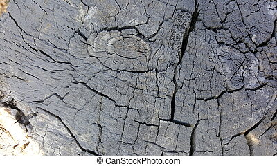 Texture of old tree stump with cracks