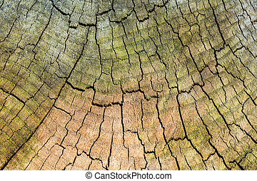 texture of old wood cut.