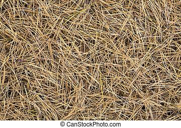 texture of pine tree needles