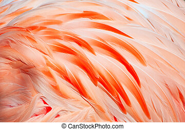 flamingo feathers - Texture of pink flamingo feathers