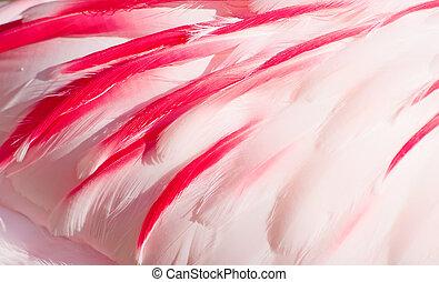 pink flamingo feathers