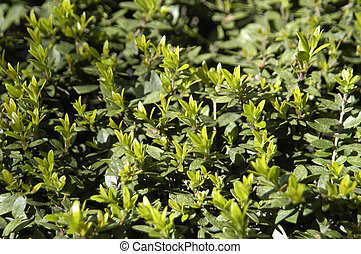 texture of plant shoots - substance and texture of plant...