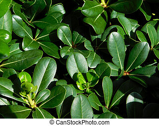 texture of plants