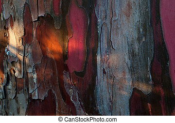 texture of red tree bark