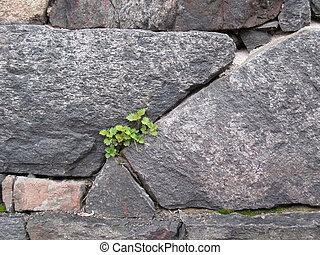 Texture of stone wall as background