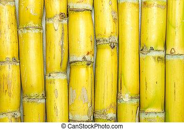 Texture of sugarcane varieties