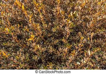 Texture of the green leaves of a bush plant