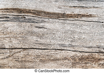 Texture of the old pine boards with cracks