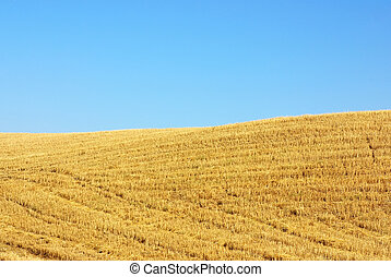 Texture of the stubble field in Portugal
