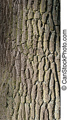 Texture of tree bark covered with green moss