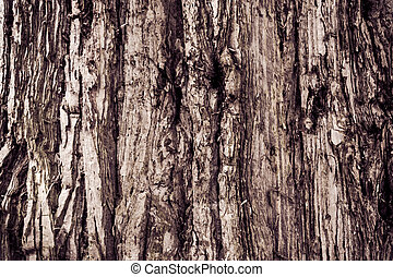 Texture Of Wood. bark of tree texture