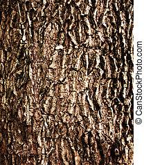 old bark tree