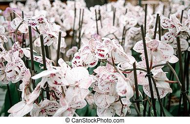 texture., orquídea, lotes, floral, fundo