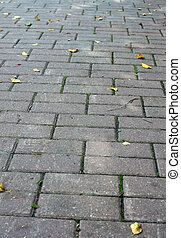 Texture path of stone tiles with autumn leaves