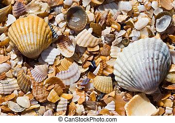 texture series: wet sea shell summer backround