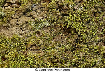 Texture tree with moss