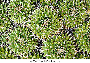 textured cactus spines