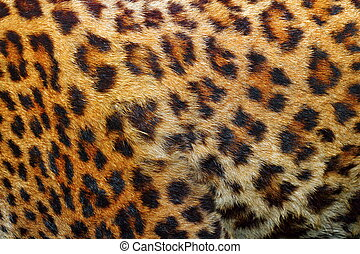 detail of leopard fur - textured detail of leopard fur (...