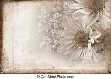 textured, gänseblumen