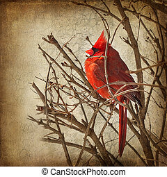 Textured Image - Red Cardinal