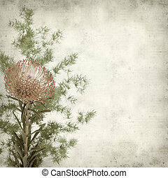 textured old paper background with red pincushion protea...