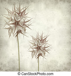 textured old paper background with starry clover, Trifolium...