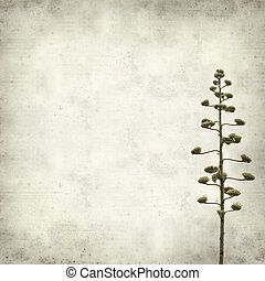 textured old paper background with Agave americana