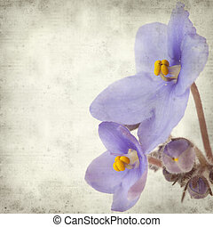 textured old paper background with blue African violet ...