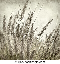 textured old paper background with cat tail grass