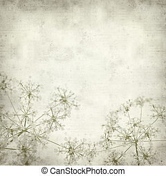 textured old paper background with cow parsley