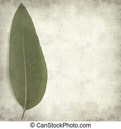 textured old paper background with fresh eucalyptus leaves