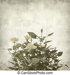 textured old paper background with pale yellow rose