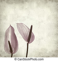 textured old paper background with purple anthurium