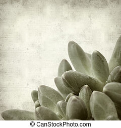 textured old paper background with small succulent potplant