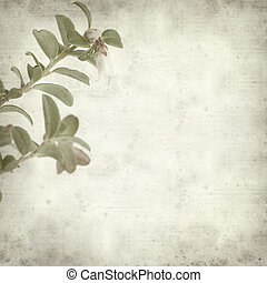 textured old paper background with tiny lingonberry flower