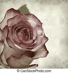 textured old paper background with unusual mottled rose