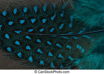 Textured peacock feather close up
